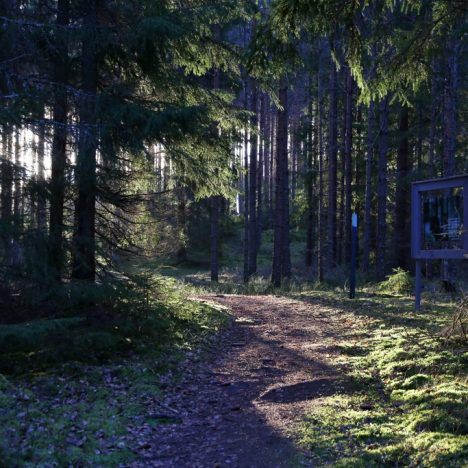 Korpinkierros Repoveden kansallispuistossa vie metsän yli ja ali