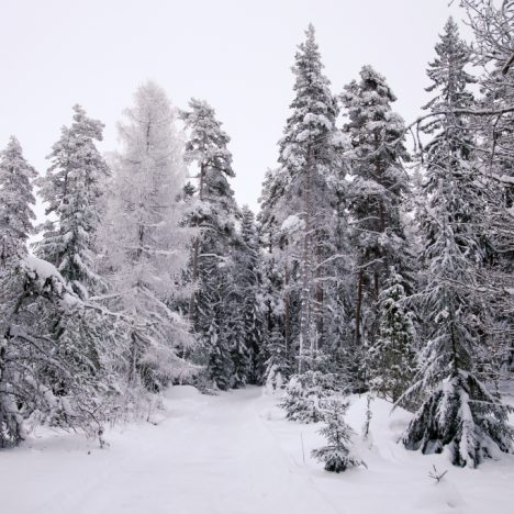 Retki talviseen Heisanharjuun
