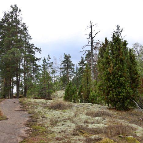Ulko-Tammion saari Itäisen Suomenlahden kansallispuistossa on kuin päivä Muumitarinoista